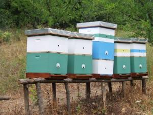 Pčelinjak selu Bastav