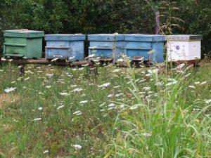 Pčelinjak u selu Bastav