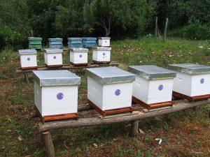 Pčelinjak u voćnjaku u selu Bastav