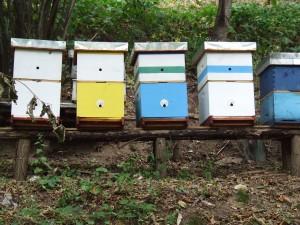 Pčelinjak u Bastavu