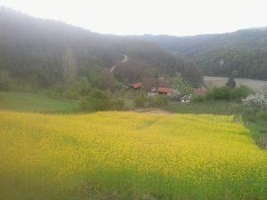 Perko, posejan ispod jednog dela pčelinjaka koji je smešten na obroncima Sokolskih planina u selu Bastavu (na putu od Valjeva ka Peckoj i Ljuboviji).