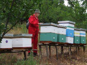Vlastimir Soldtović, jedan od osnivača pčelinjaka Soldatović, u redovnom, svakodnevnom obilasku