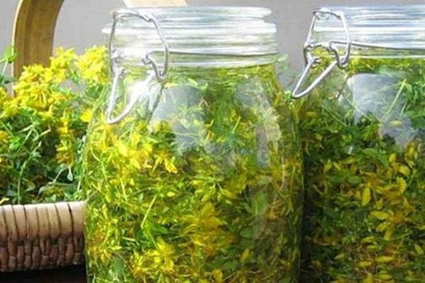 Cvet kantariona potopljen u masliovo ulje